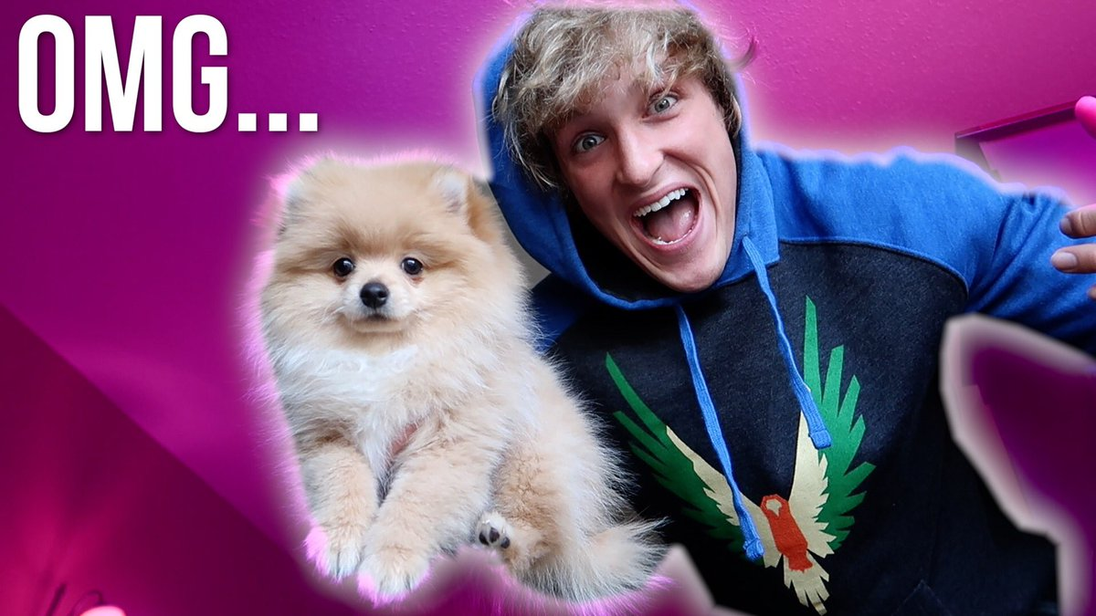 Which Breed Is Logan Paul S Dog