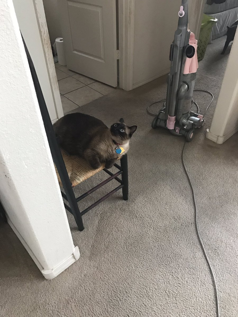 Cat behavior problems urinating outside box