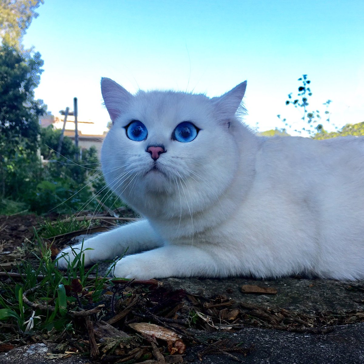 Coby The Cat (@CobyThecat) | Twitter