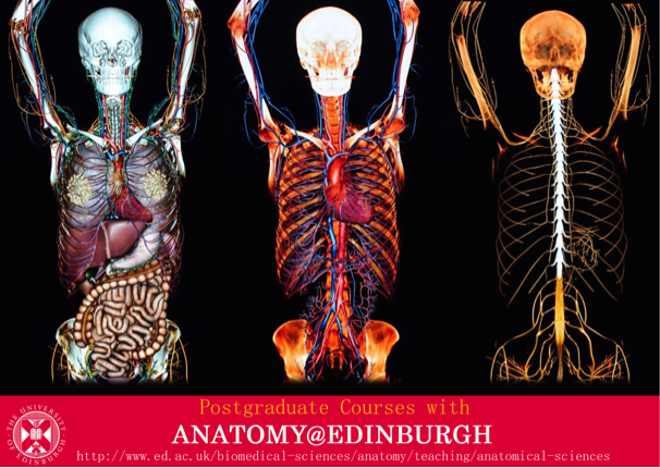 Anatomyedinburgh On Twitter Love Anatomy Study Here In Beautiful