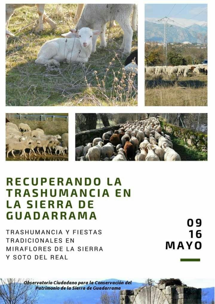 Proyecto para lograr la recuperación de la trashumancia como valor cultural, ecológico y económico para la Sierra de Guadarrama