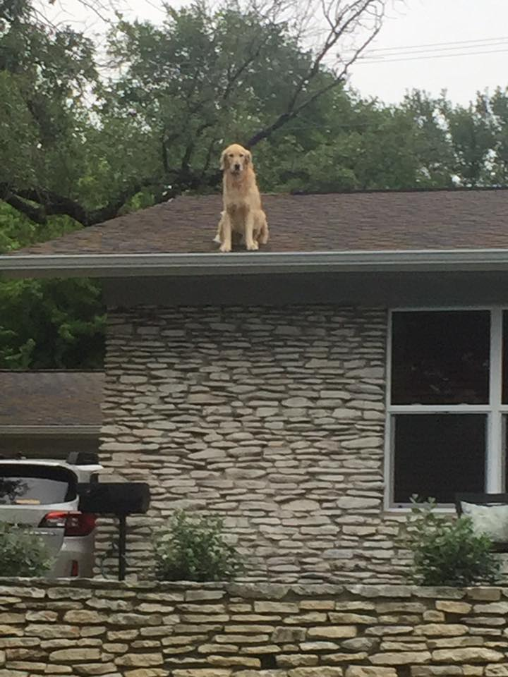 Dog on a roof is having a great time, thanks for asking