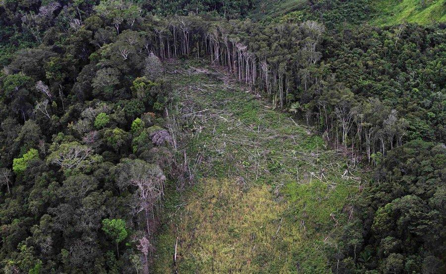 Câmara libera área da Amazônia três vezes maior que a cidade de SP para exploração de madeira e agropecuária https://t.co/EsXEQvOIC3