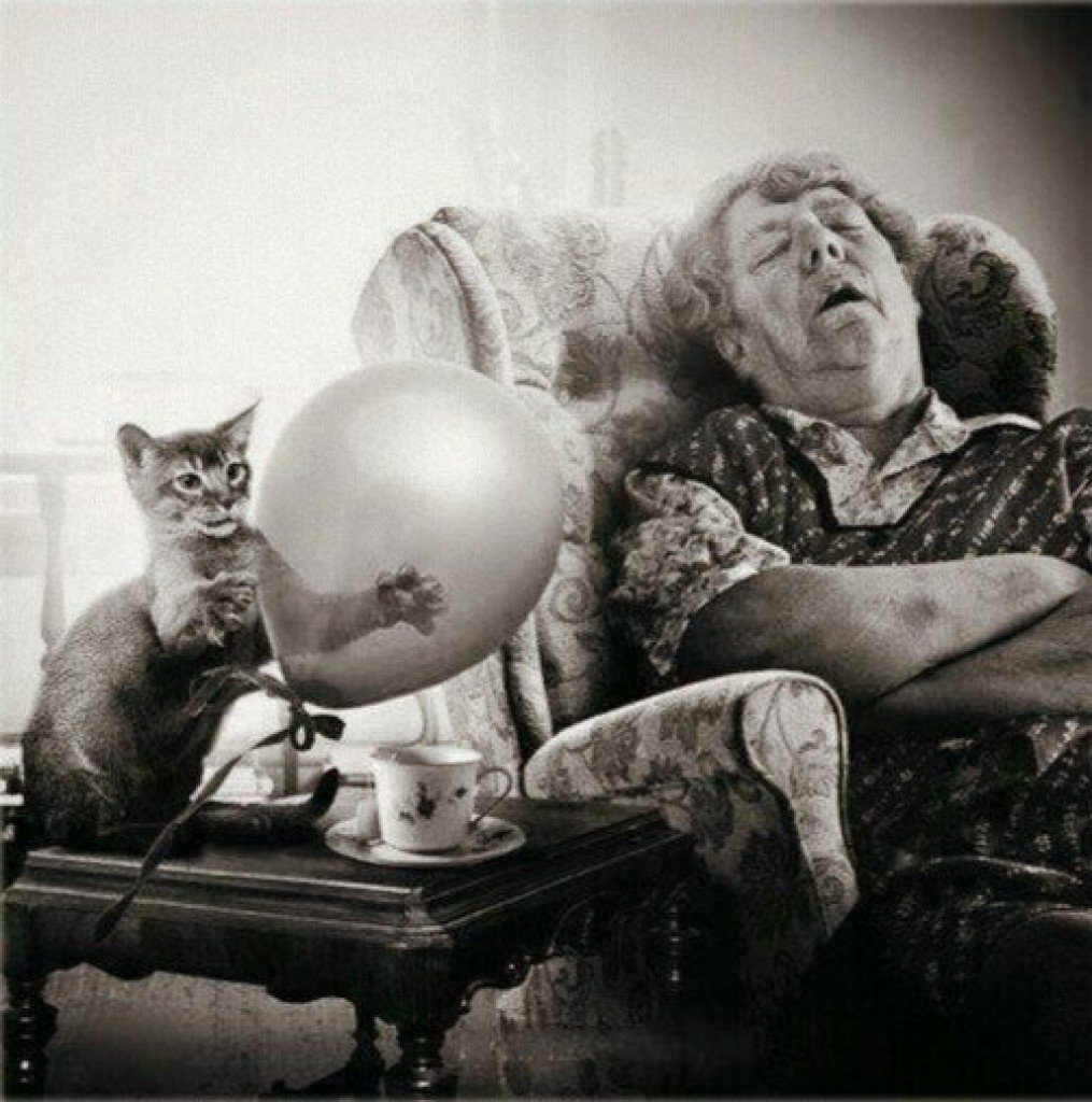 WHAT?! Old Ladies with #CrazyCats Antique Store Freak Out #Bonanza!!!  https:// youtu.be/uKEd-0ITuJ4  &nbsp;   via @truthstreamnews great report #mustwatch<br>http://pic.twitter.com/zFPJhsr0dT