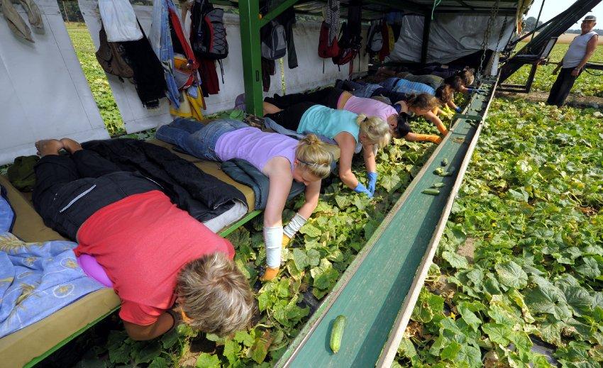 Днем рождения, смешные картинки про урожай огурцов