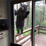 楽しくブラウニーを焼いてたら!匂いにつられてクマがやってきた!