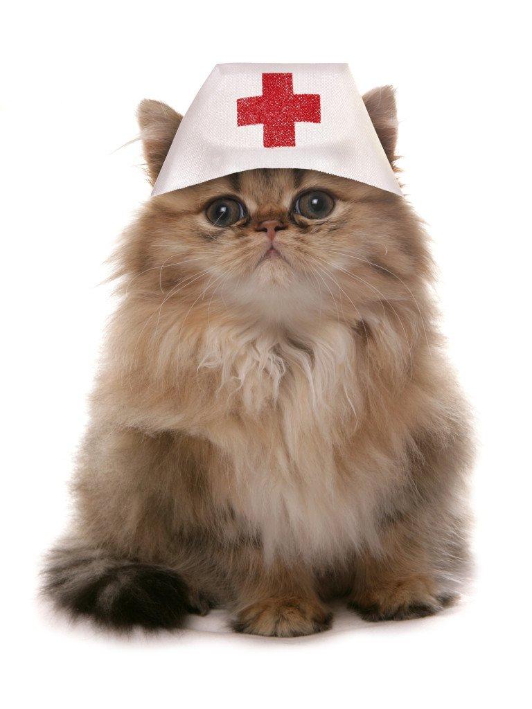 Кот врач гифка