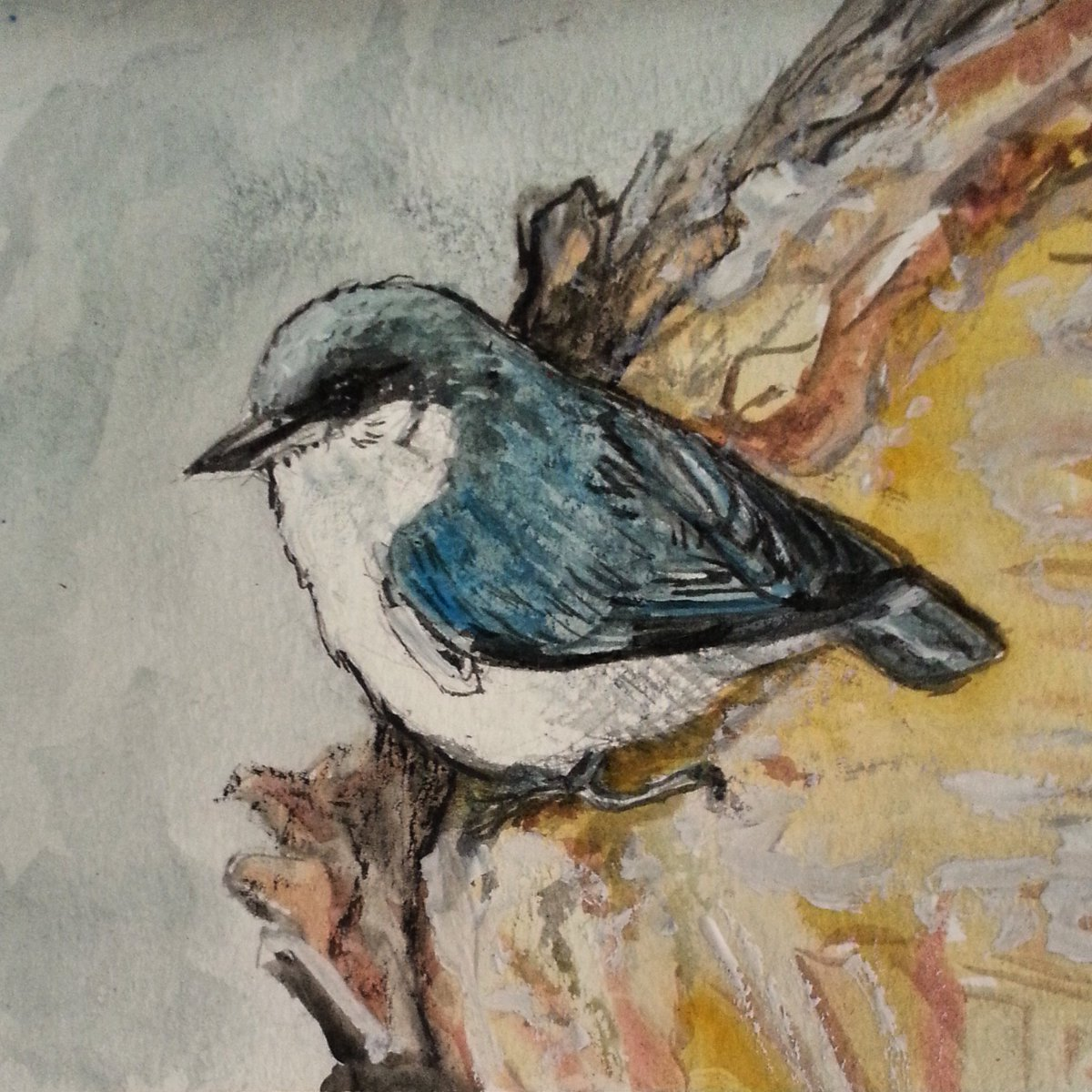 pygmy nuthatch painting
