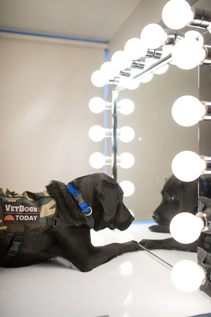 Mirror, mirror, on the wall, who\'s the cutest pup of them all? #TODAYPuppy