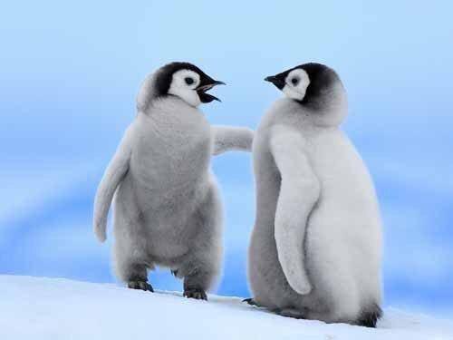 突っ込みペンギン