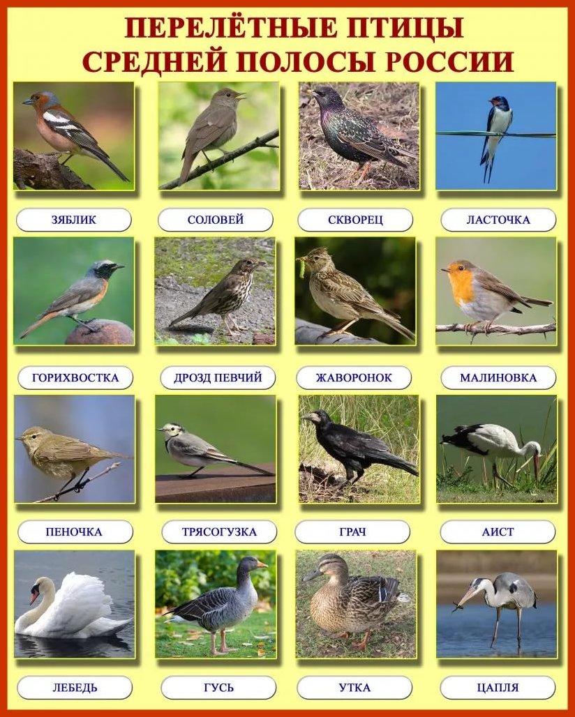 Мем, перелетные птицы картинки с надписью