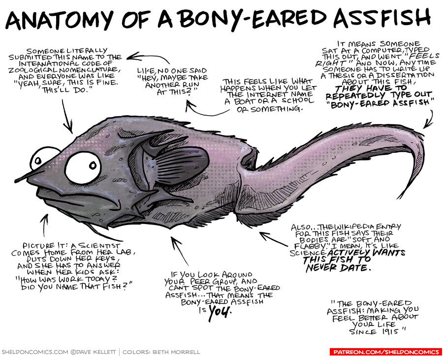 Dave Kellett On Twitter Anatomy Of The Bony Eared Assfish Https