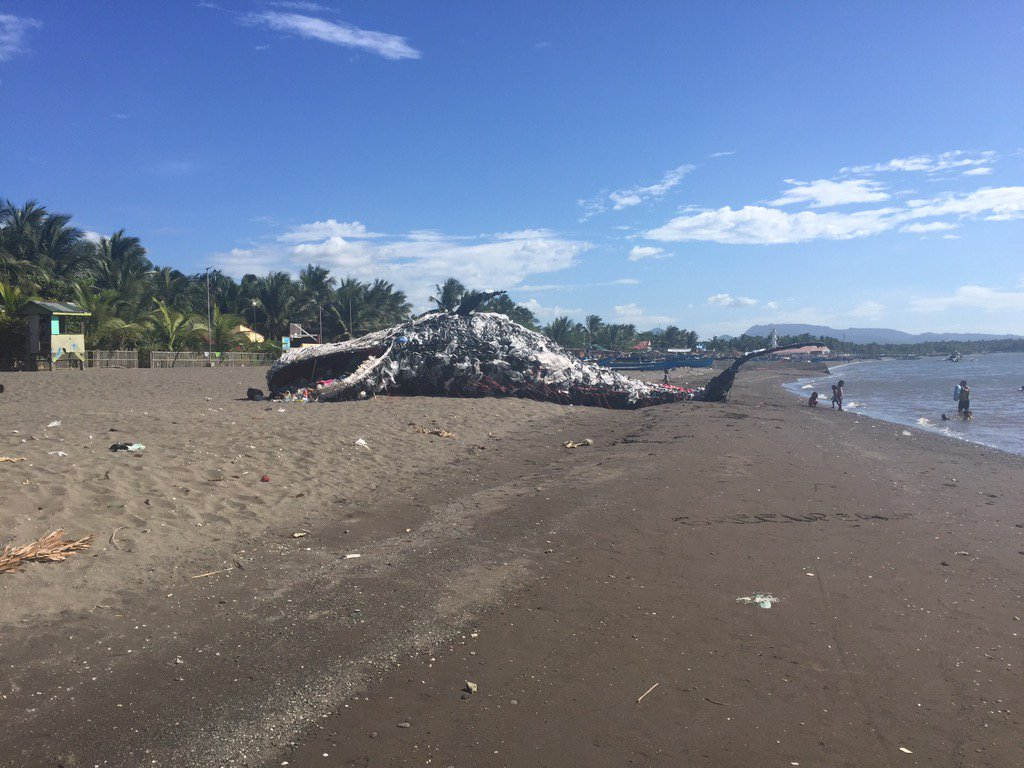 Whale made of plastic along the shore in Naic. Made to send a message on plastic pollution in Philippine oceans | via @raphbosano