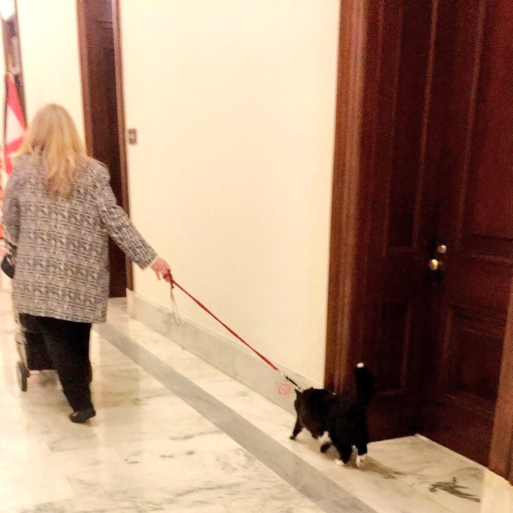 Black Cat Walks Through Senate Building