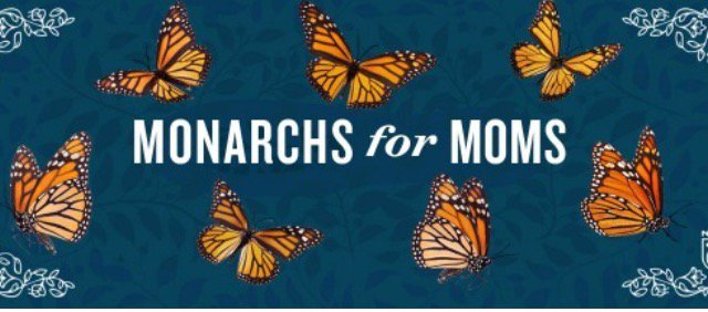 Help the Monarch Butterflies, plant a milkweed #Monarchfood @NRDC https://t.co/9cYNYmBahz