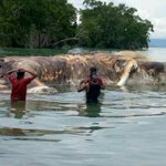 まさしくクラーケン!インドネシアに全長15メートルのイカが漂着した!