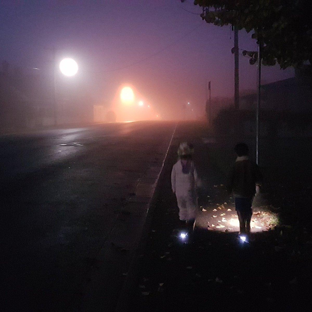 peaceful early morning stroll - HD1200×1200