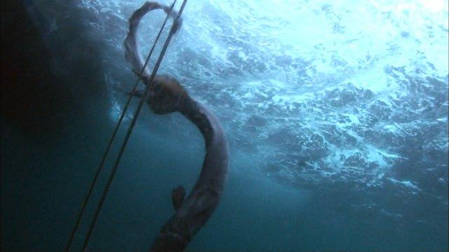 【超貴重生物】TOKIOの城島茂と山口達也が幻のサメを東京湾で捕獲 https://t.co/ZarZguW7KR  ラブカは4億年前から姿を変えずに現存する最古の魚類。14日放送の『鉄腕!DASH!!』で生きたまま発見したという。