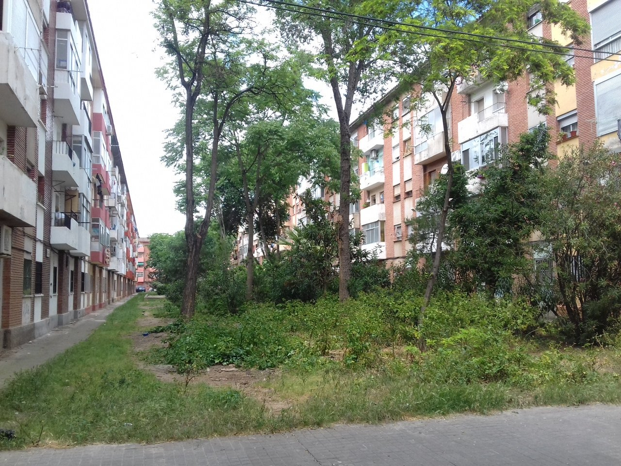 """""""Esto es pobreza, y falta de conciencia"""" lo que podía ser un lujo verde en mitad de la ciudad en #LasFuentes https://t.co/NIJrPl869C"""