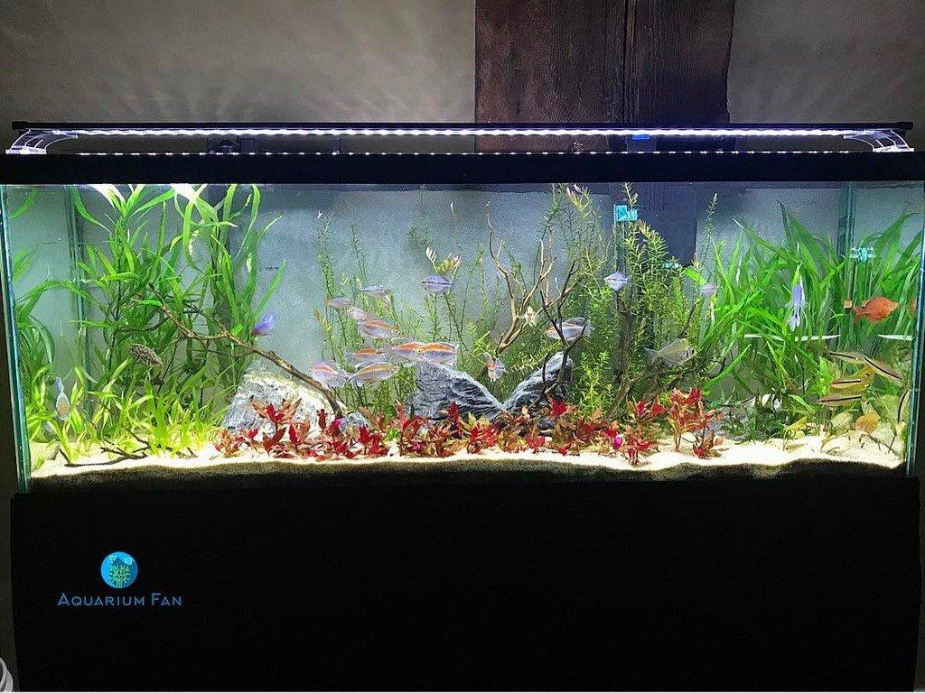 aquarium fan on twitter the 55 finnex planted plus 24 7 pool