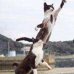近距離パワー型のスタンド使い?!完全にジョジョな猫の写真がかっこいい