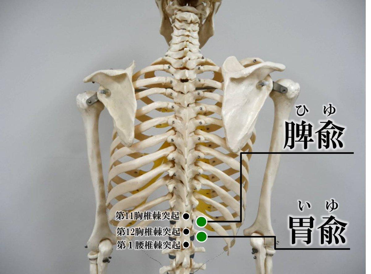 胸椎 棘 突起