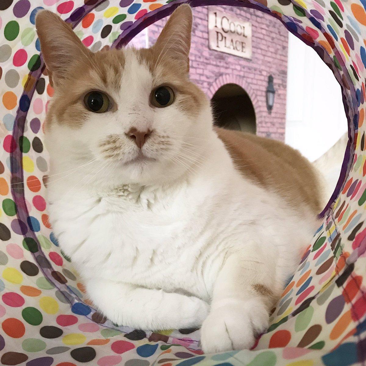 Kitty tube asian