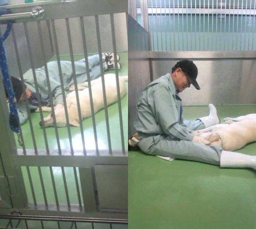 札幌市がんばれ!!!!!  「札幌市は犬の殺処分ゼロ4年目に入りました~北海道」 https://t.co/agJfRA2KC4 https://t.co/ldSsijiRg4