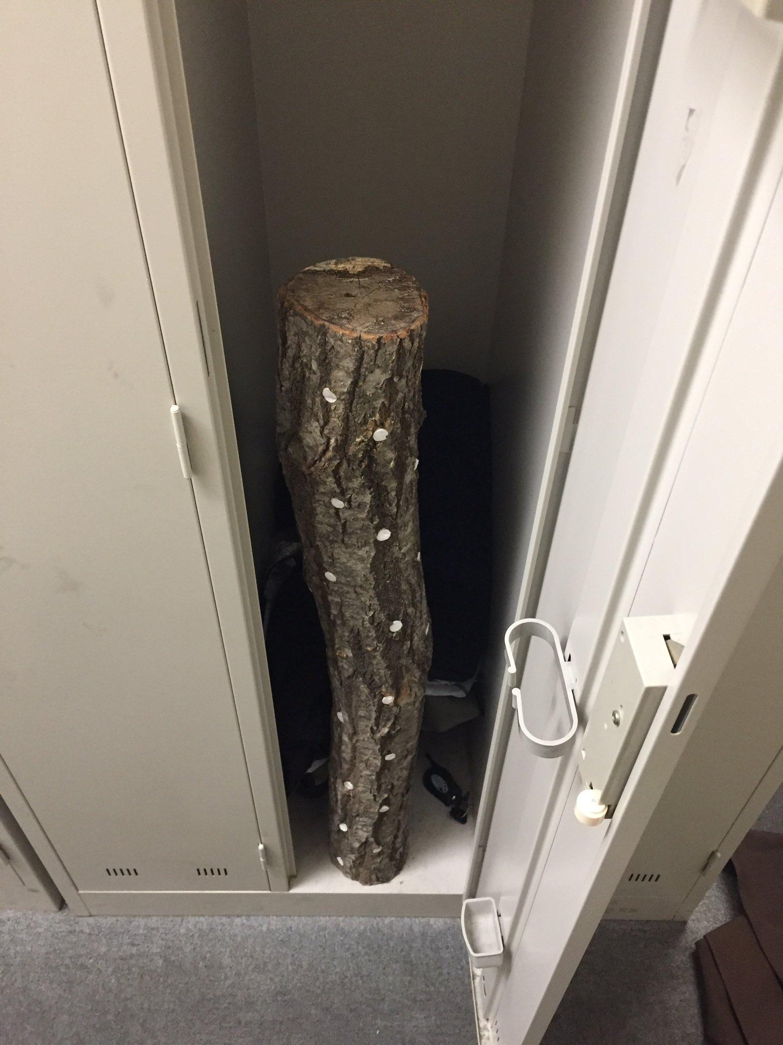 バイトの後輩が「ロッカーにしいたけ入れときましたから!」と言われウキウキしながらロッカーを開け原木が入っていた時のぼくの気持ちを答えよ。