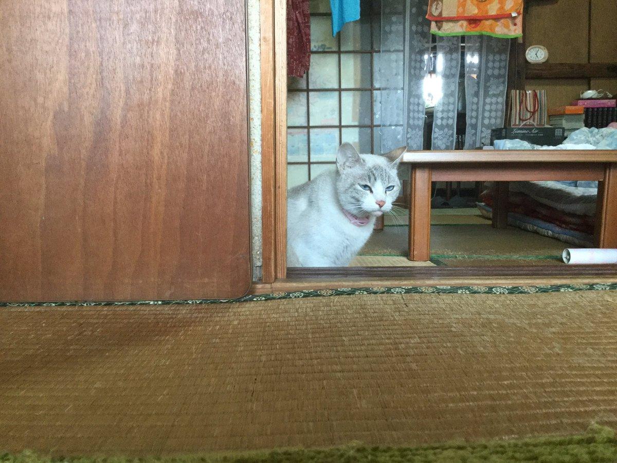 実家の猫の横からちっちゃいの出てきた。