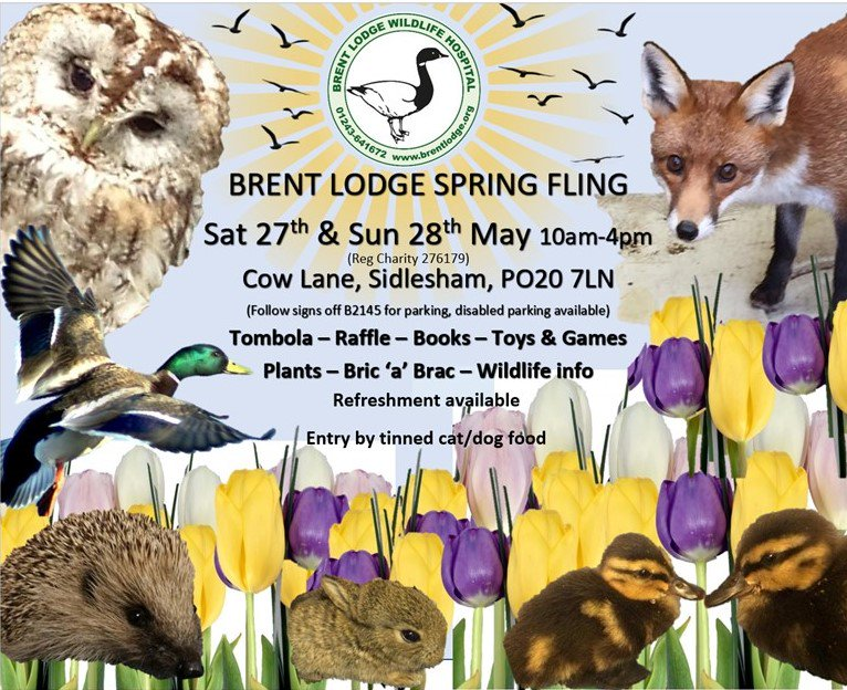 test Twitter Media - Only 2 weeks to go until our Spring Fling Fundraising Open Weekend we look forward to seeing you there... don't miss out on it! #wildlife https://t.co/T5RdnZtDwk