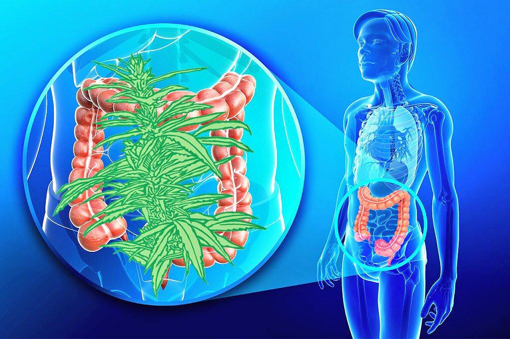 Health Benefits Of Cannabidiol
