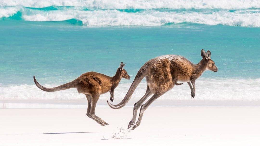RT @mashable: Gawk at these super gorgeous Instagram shots of Australia. https://t.co/Du5NDqZ9qP https://t.co/ipSLsnnpVB