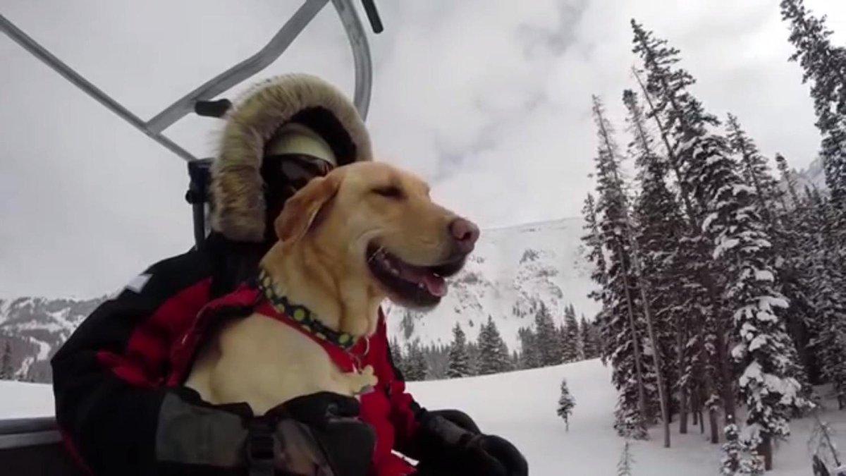 Telluride Ski Patrol Wins GoPro Award For Avalanche Rescue Dogs Video