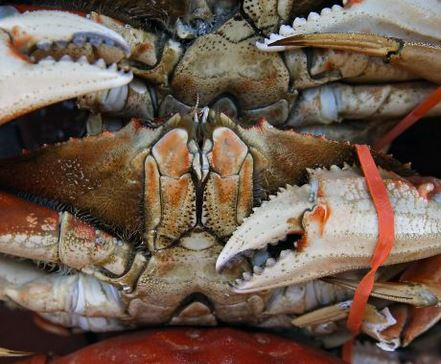 Crab warning lifted: Locally caught Dungeness is declared safe. via @NanetteAsimov
