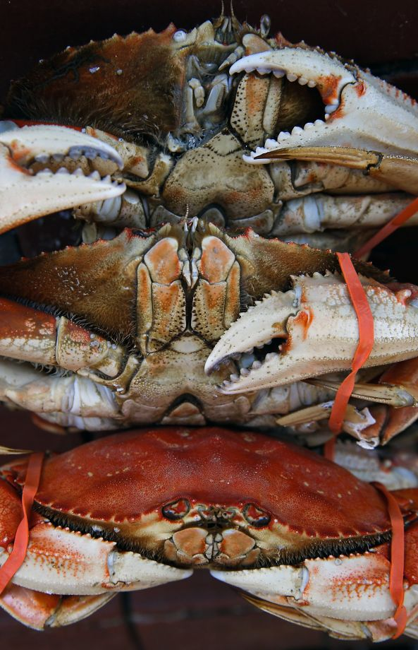 Crab warning lifted: Dungeness caught in Bay Area coast is declared safe