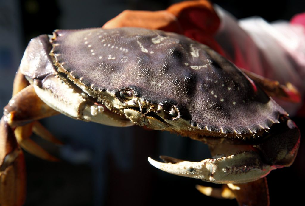 Gov. Brown requests federal disaster aid for California crabbers