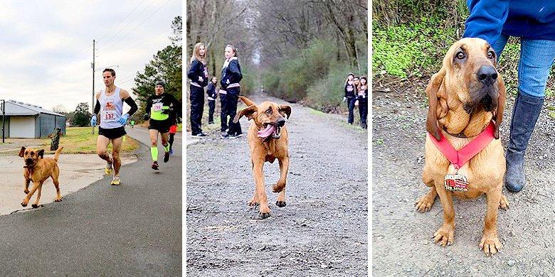 Ludivine The Lovable Hound Dog Runs Off To Compete In Alabama Half Marathon – Finishes In … https://t.co/3UiekmhCm7 https://t.co/duZJq2tlut