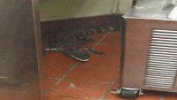 A Florida man is accused of tossing an alligator at a @Wendys drive-thru: via @AP