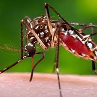 Hawaii Island declares dengue fever state of emergency.