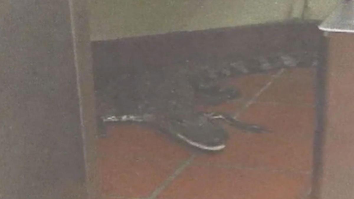 Florida man arrested after hurling alligator through Wendy's drive-thru