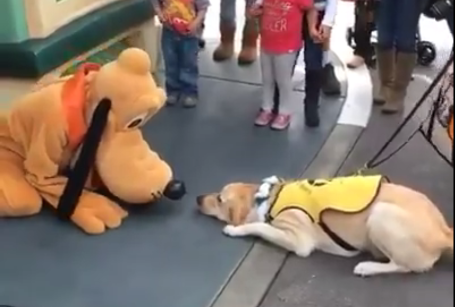 This dog is incredibly excited to meet Pluto at Disneyland