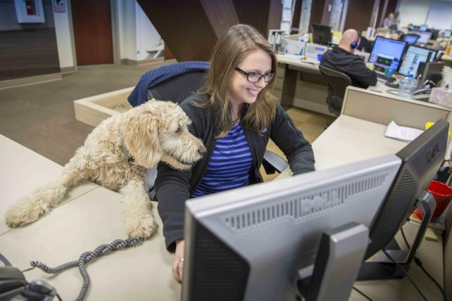 Mars Petcare: Where every day is 'Bring Your Dog to Work Day' https://t.co/11n2YmS81M https://t.co/JNR1m63mzZ