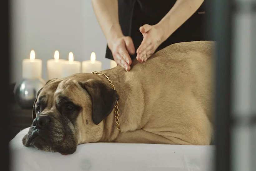 Pampered guard dog sells @panasonic's Internet of Things products https://t.co/E84wAzCONM @MarketingUK https://t.co/wFOkpYPePb