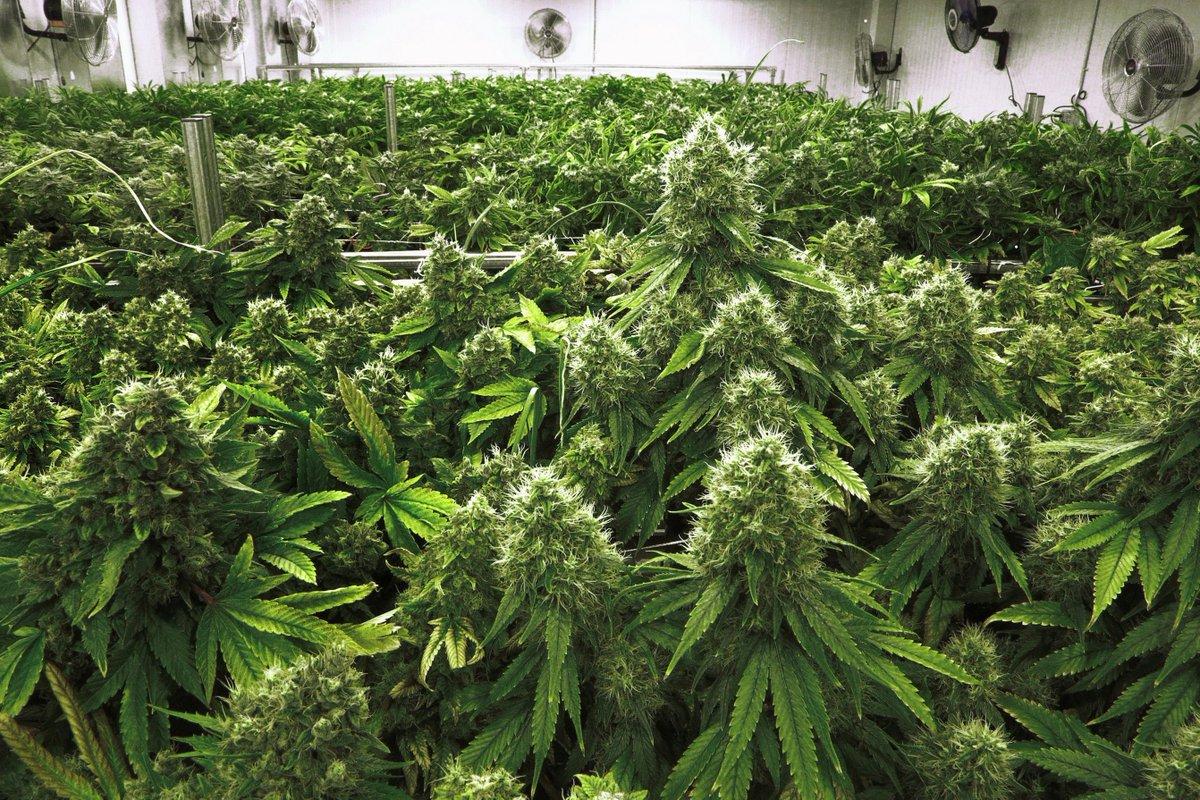 Few Illinois doctors willing to prescribe medical marijuana to patients