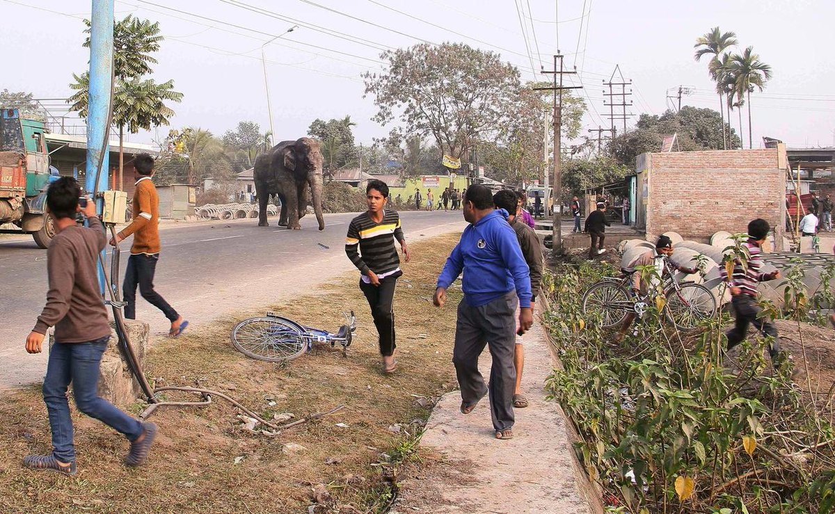 Scared wild elephant wanders into Indian town smashing homes, cars before being tranquilized