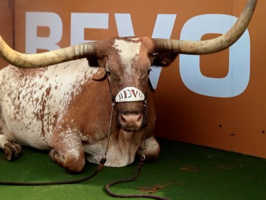 UT sets date to reveal Bevo XV after Bevo XIV's passing