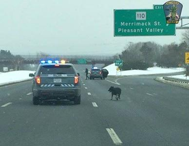 State police save dog wandering on I-495