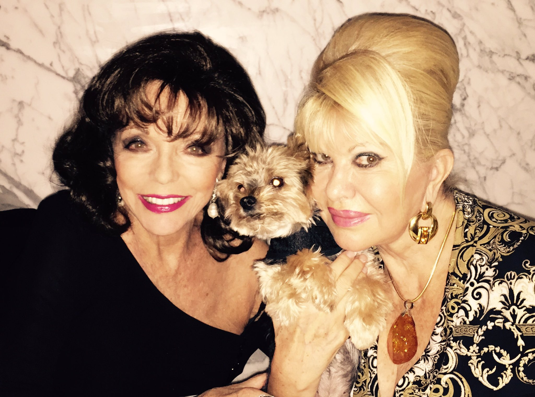 Amusing dinner with #Ivana and Tiger #puppies https://t.co/2vWcr9QGak