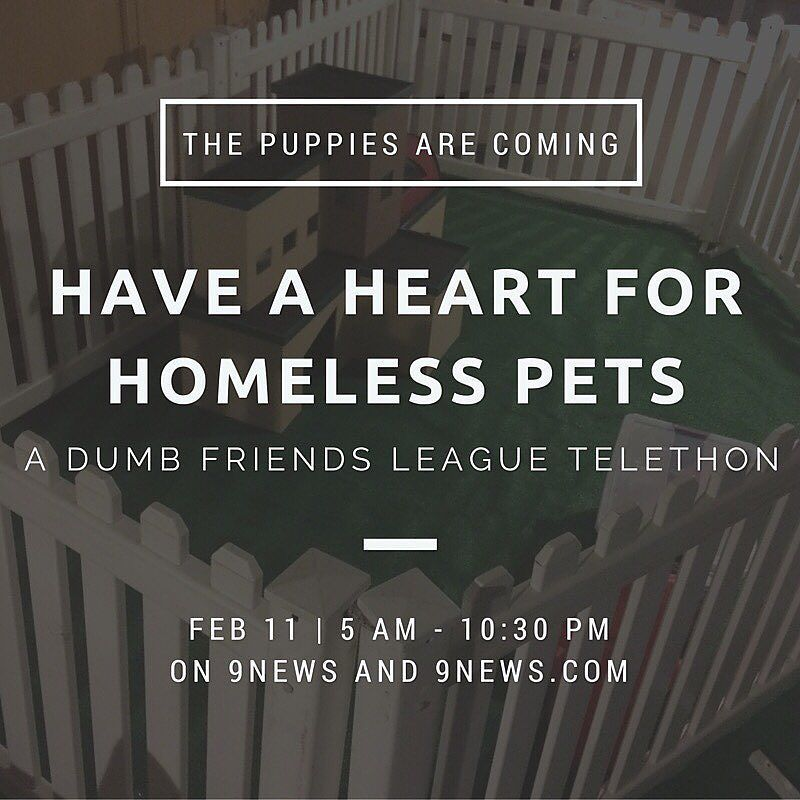 Get ready for an overload of adorable puppies: 9NEWS is partnering with the Dumb Friends…
